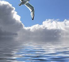 Soaring With The Clouds by Sally Green