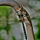 Dragonfly!!! by Larry Trupp