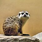 That's Mr. Meerkat To You! by SuddenJim