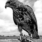 """Leighton"" Buzzard - Gloucester  by Daniel Warner-Meanwell"