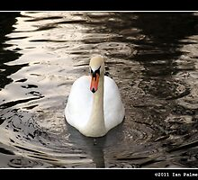 Swan Lake by ians3