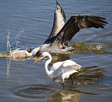 Pelican giving Fishing Tips to a Egret by Paulette1021