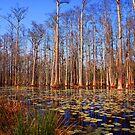 Trees in the swamp of Cypress Gardens SC by Susanne Van Hulst
