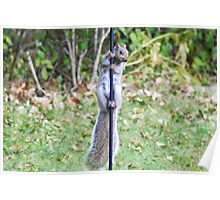 Persistent Acrobatic Hungry Squirrel Poster