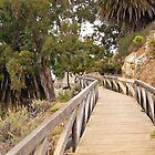 Walkway at Saddle Rock Ranch - Big Sur CA by Nicole Clements