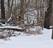 Snowy woods by mltrue