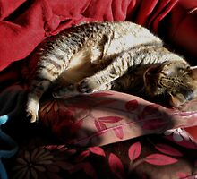 A Cat, Two Cushions, and Sunshine by Karen Martin