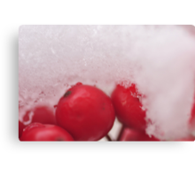 Berries in the Snow, As Is Canvas Print
