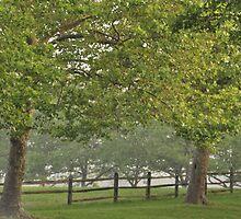 Nimrod Farm, As Is by Kim McClain Gregal