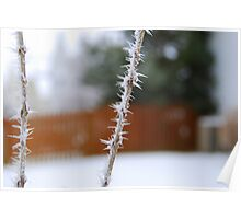 Illinois Hoar Frost Poster