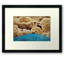 Sponges on the dock Framed Print