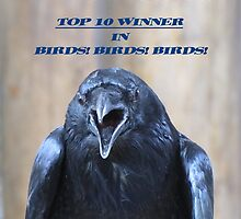 Top 10 Winners' Banner for Birds!Birds!Birds! by hummingbirds