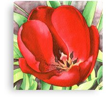 Red Tulip - Watercolour marker painting Canvas Print