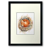 Mouse in the nest Framed Print