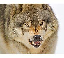 Temper! Photographic Print
