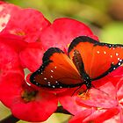 Colorful Butterflies by Rosalie Scanlon