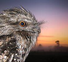 Tawny Sunrise by Su Walker