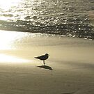 Sunset Gull by Louise Linossi Telfer