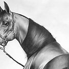 Arabian Knights Series #2 by michael montgomerie