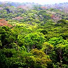 Okinawa Jungle by Jesse  B.