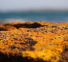 Burn, Bawley Point by johnno