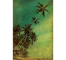 Tropical Vestige Photographic Print