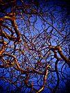 Gnarled Tree, Eltham Palace by Lisa Hafey