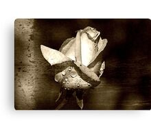 Rose w/ Droplets Canvas Print
