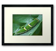 Green 5-Caterpillar Framed Print