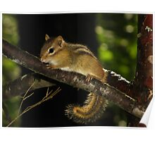 Eastern Chipmunk in Enchanted Forest Poster