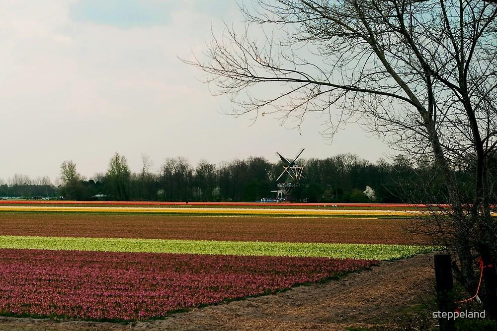 There near that windmill - Daarbij die molen...  by steppeland