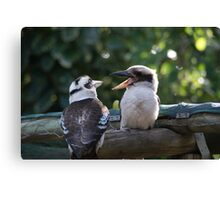 Kookaburras Breakfast - 10 0f a series of 10 pictures Bowen North Queensland Canvas Print