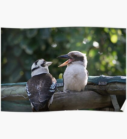 Kookaburras Breakfast - 10 0f a series of 10 pictures Bowen North Queensland Poster