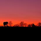 Horse at Sunset by James  Key