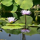 Waterlilies on a Summer Afternoon by TangledWood