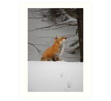 Snowy Red Fox Art Print