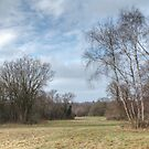 Banstead Common, Surrey, in February by physiognomic