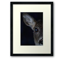 Watchful eyes II Framed Print
