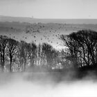 Trees above the Mist by mikebov