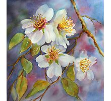 Blossom Time  (early spring) Photographic Print