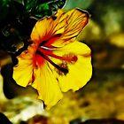 Hibiscus by Karen Checca