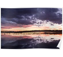 Bosque Sunset Poster
