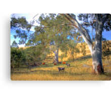 Among the Gum Trees - Mount Torrens, Adelaide Hills, SA Canvas Print