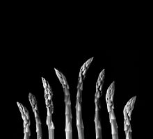 ASPARAGUS by Patrick Downey