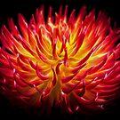 Flower dance by Miron Abramovici