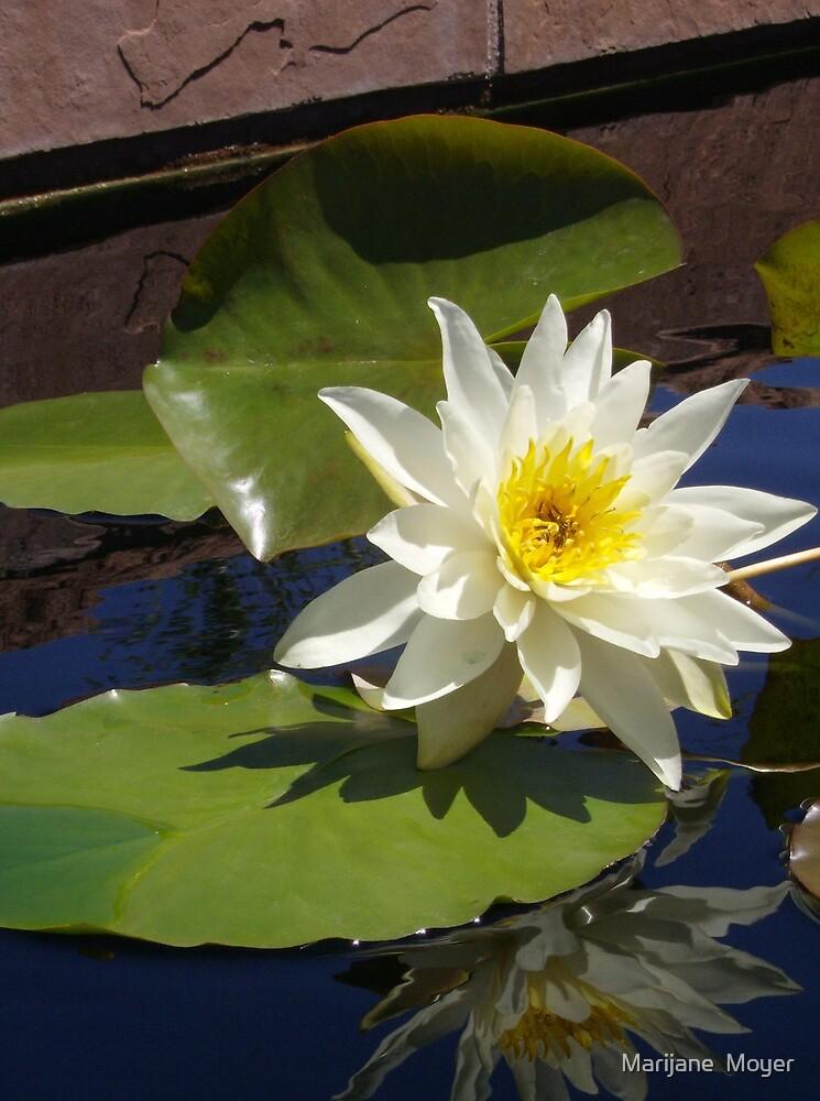 Lily I - Denver Botanic Gardens by Marijane  Moyer