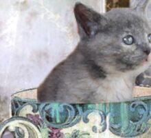 Cat in the Cup (orig.) Sticker