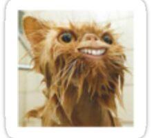 Beautiful Cat Smiling Sticker