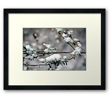 Snowkiss'd Butterfly Bush Framed Print
