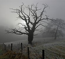 Trees in the fog by RedMann